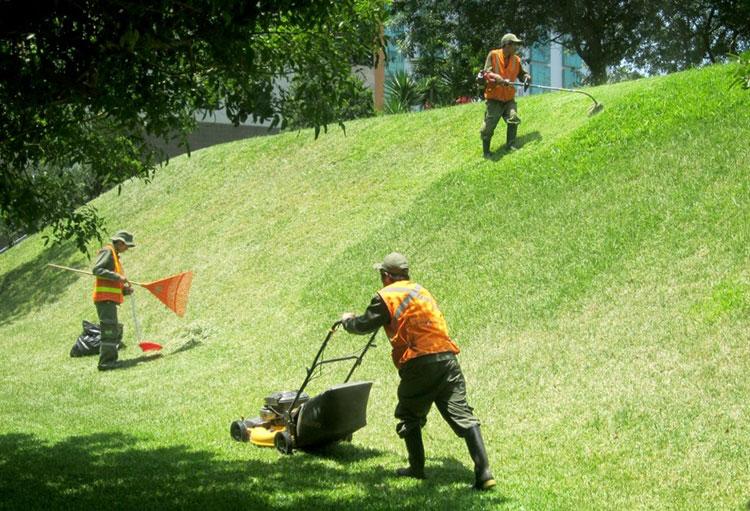 curso de mantenimiento de jardines en lanzarote esacan